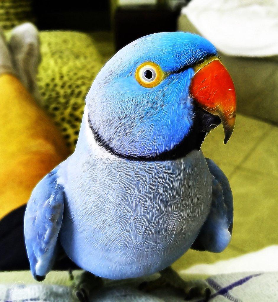Petie-Bird.JPG